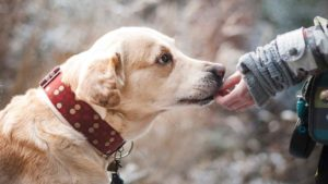 How a companion dog can help you with anxiety and stress relief?