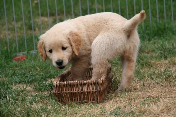 dog potty training puppy